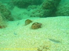 Thailand 02.03.2013 Hausreef Dive 3 TG